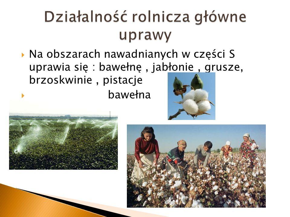 Działalność rolnicza główne uprawy