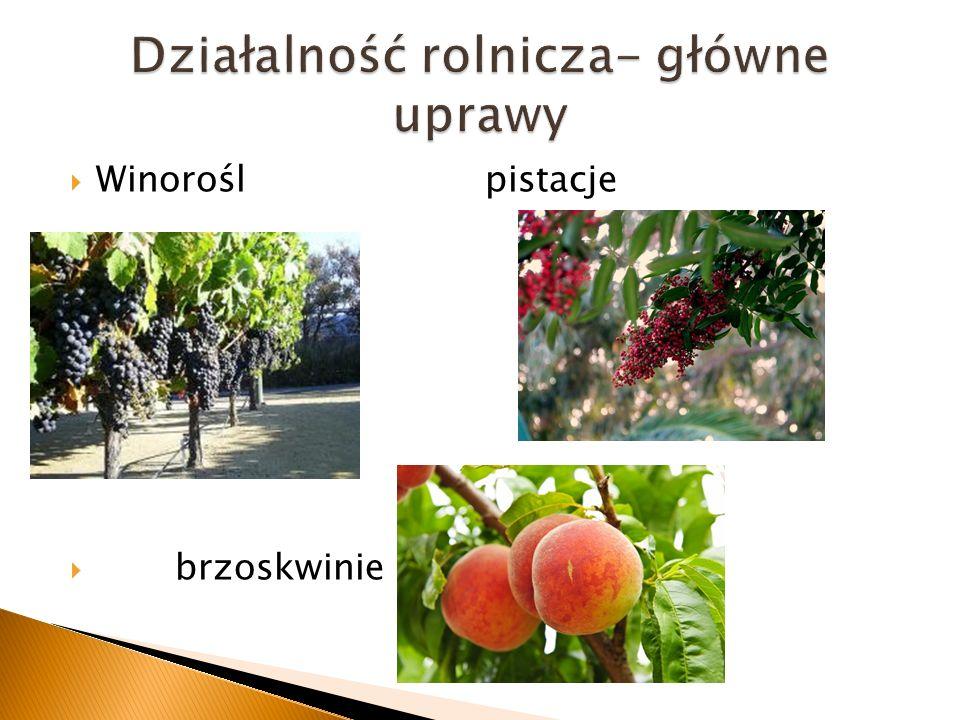 Działalność rolnicza- główne uprawy