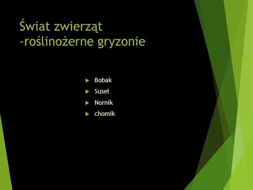 Świat zwierząt -roślinożerne gryzonie