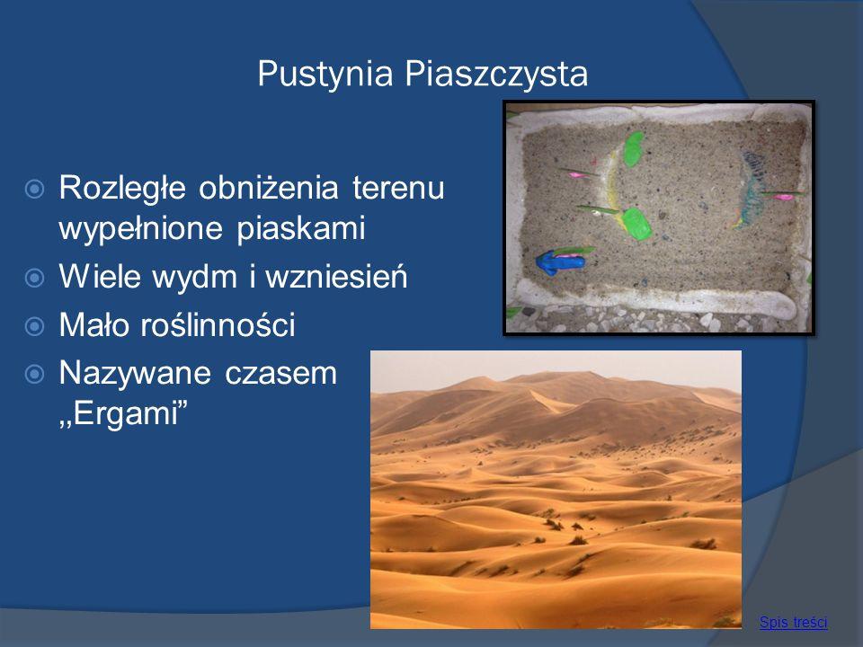 Pustynia Piaszczysta Rozległe obniżenia terenu wypełnione piaskami
