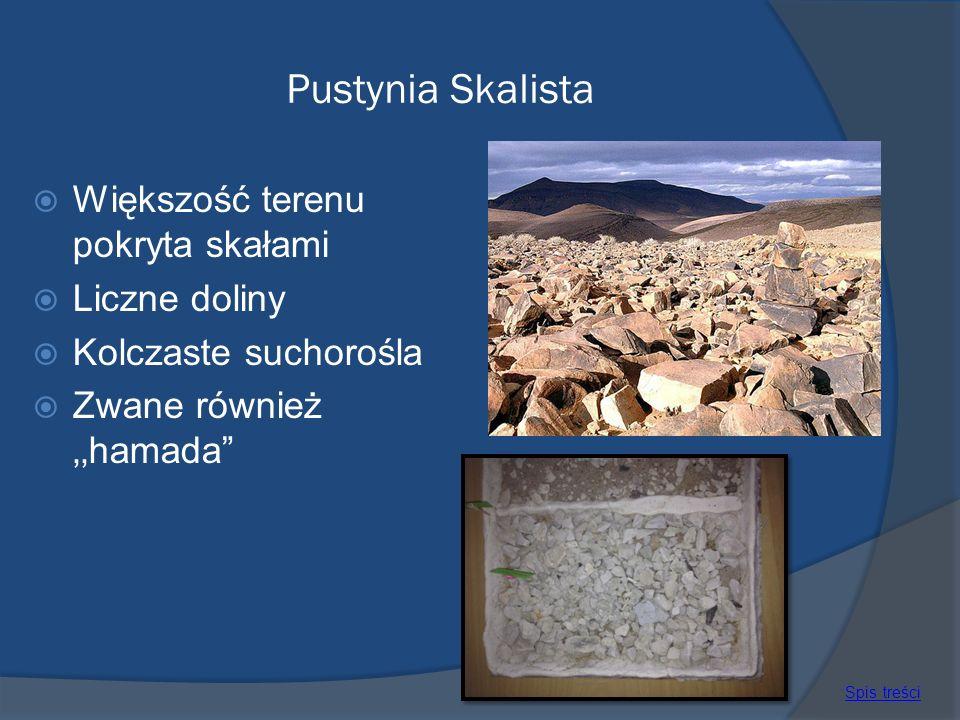 Pustynia Skalista Większość terenu pokryta skałami Liczne doliny