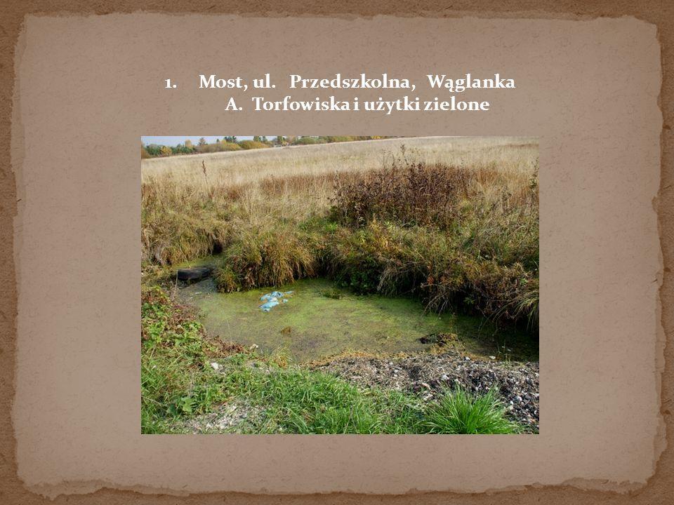 Most, ul. Przedszkolna, Wąglanka A. Torfowiska i użytki zielone