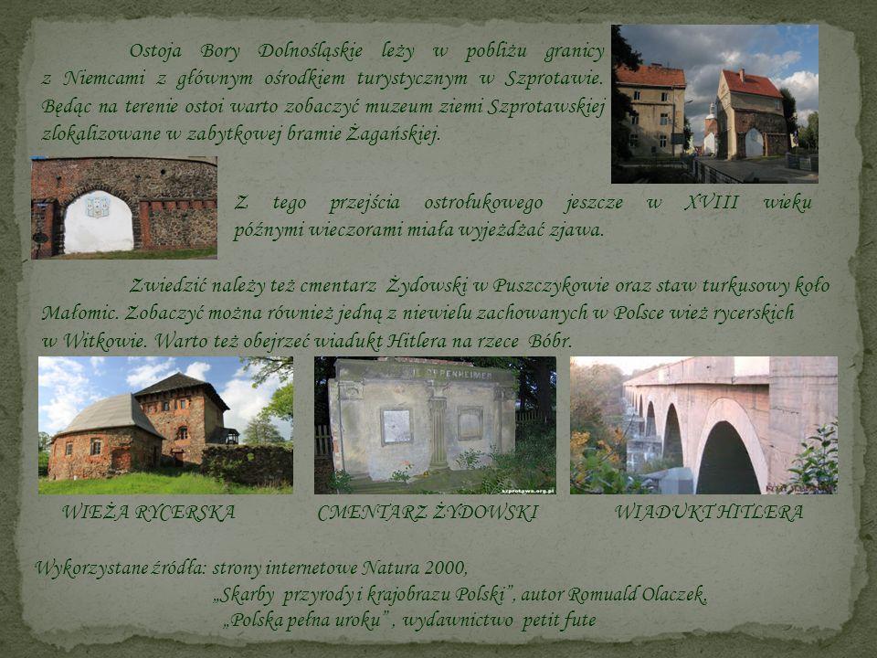 Ostoja Bory Dolnośląskie leży w pobliżu granicy z Niemcami z głównym ośrodkiem turystycznym w Szprotawie. Będąc na terenie ostoi warto zobaczyć muzeum ziemi Szprotawskiej zlokalizowane w zabytkowej bramie Żagańskiej.