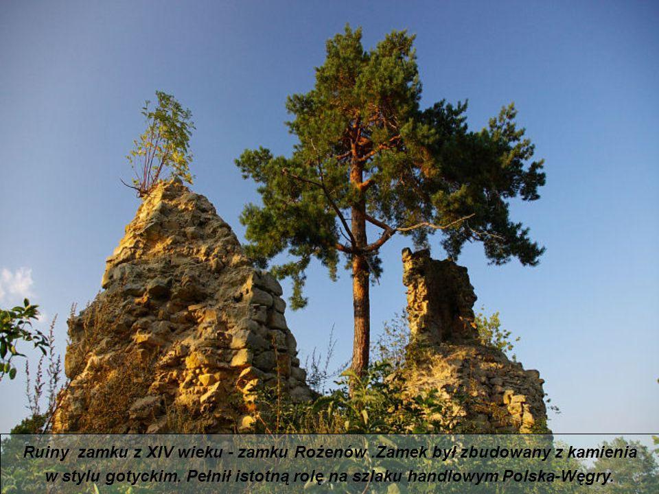 Ruiny zamku z XIV wieku - zamku Rożenów .Zamek był zbudowany z kamienia
