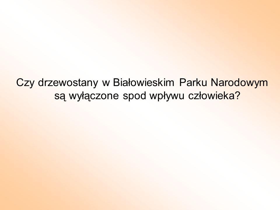 Czy drzewostany w Białowieskim Parku Narodowym są wyłączone spod wpływu człowieka