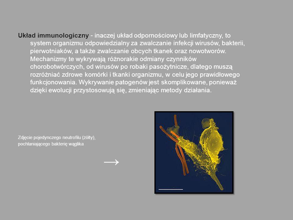 Układ immunologiczny - inaczej układ odpornościowy lub limfatyczny, to system organizmu odpowiedzialny za zwalczanie infekcji wirusów, bakterii, pierwotniaków, a także zwalczanie obcych tkanek oraz nowotworów. Mechanizmy te wykrywają różnorakie odmiany czynników chorobotwórczych, od wirusów po robaki pasożytnicze, dlatego muszą rozróżniać zdrowe komórki i tkanki organizmu, w celu jego prawidłowego funkcjonowania. Wykrywanie patogenów jest skomplikowane, ponieważ dzięki ewolucji przystosowują się, zmieniając metody działania.