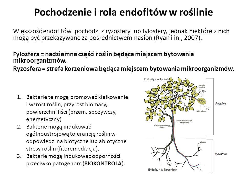 Pochodzenie i rola endofitów w roślinie