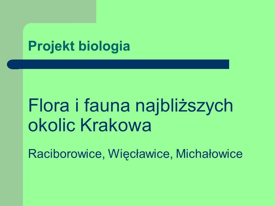 Flora i fauna najbliższych okolic Krakowa
