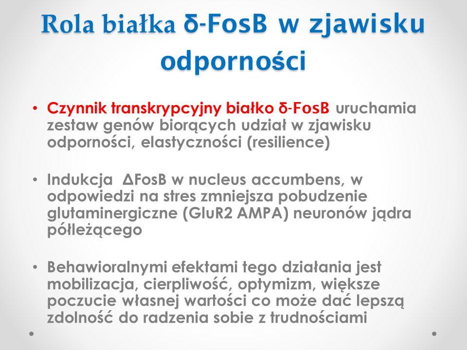 Rola białka δ-FosB w zjawisku odporności