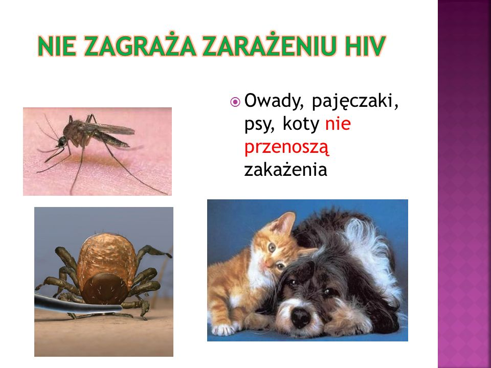 Nie zagraża zarażeniu hiv