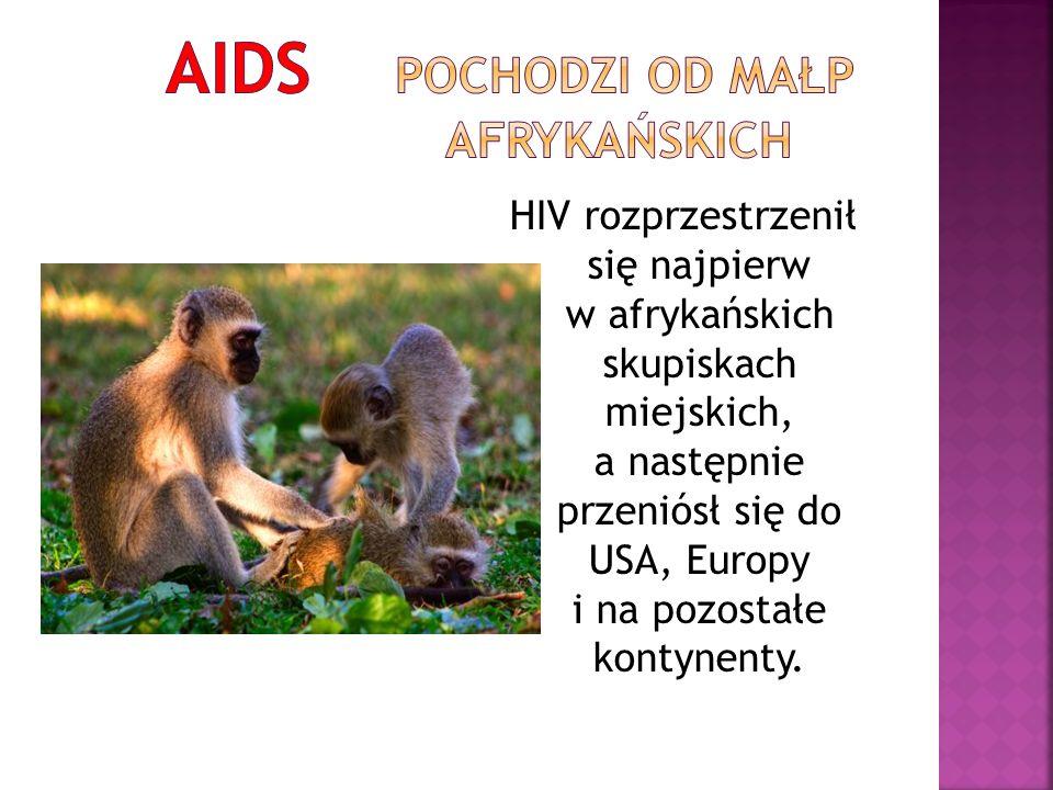 AIDS pochodzi od małp afrykańskich
