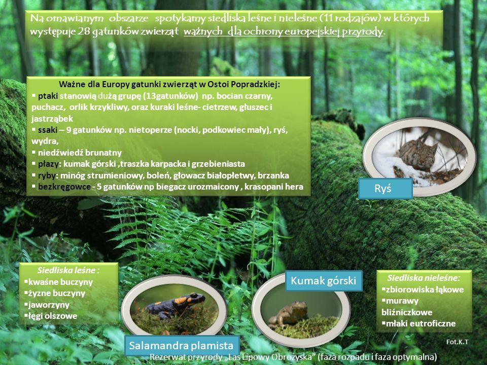 Ważne dla Europy gatunki zwierząt w Ostoi Popradzkiej: