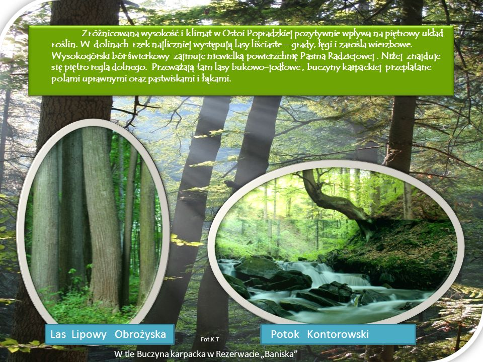 Las Lipowy Obrożyska Potok Kontorowski