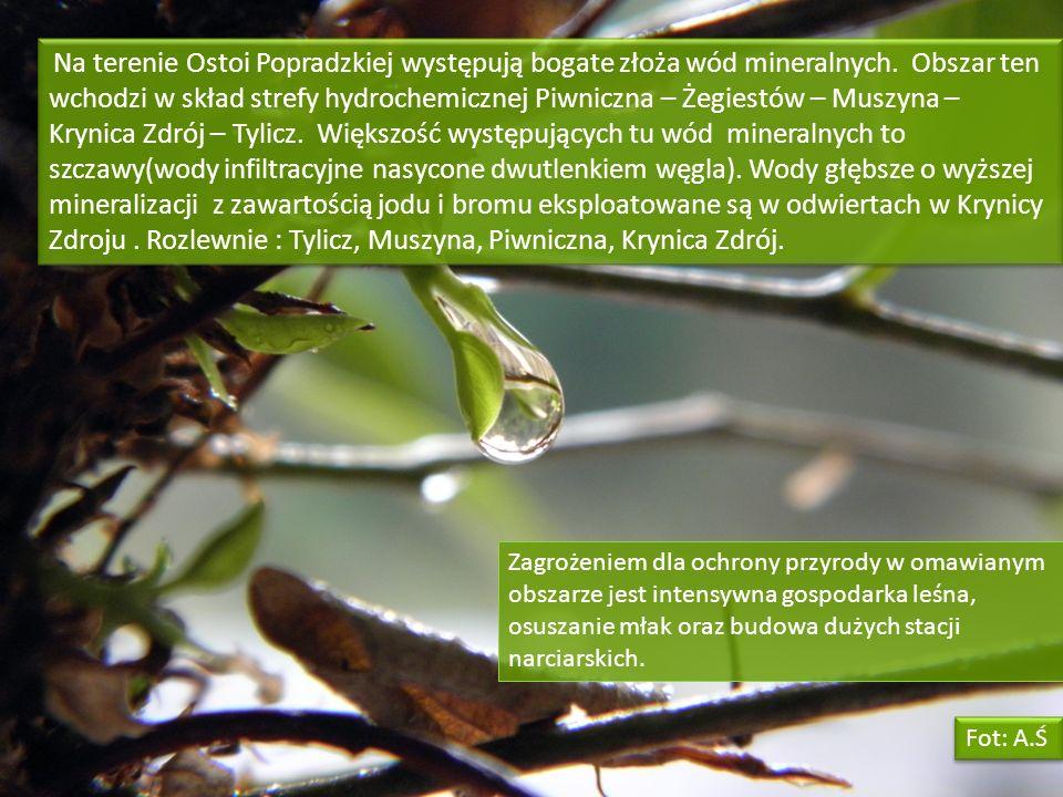Na terenie Ostoi Popradzkiej występują bogate złoża wód mineralnych