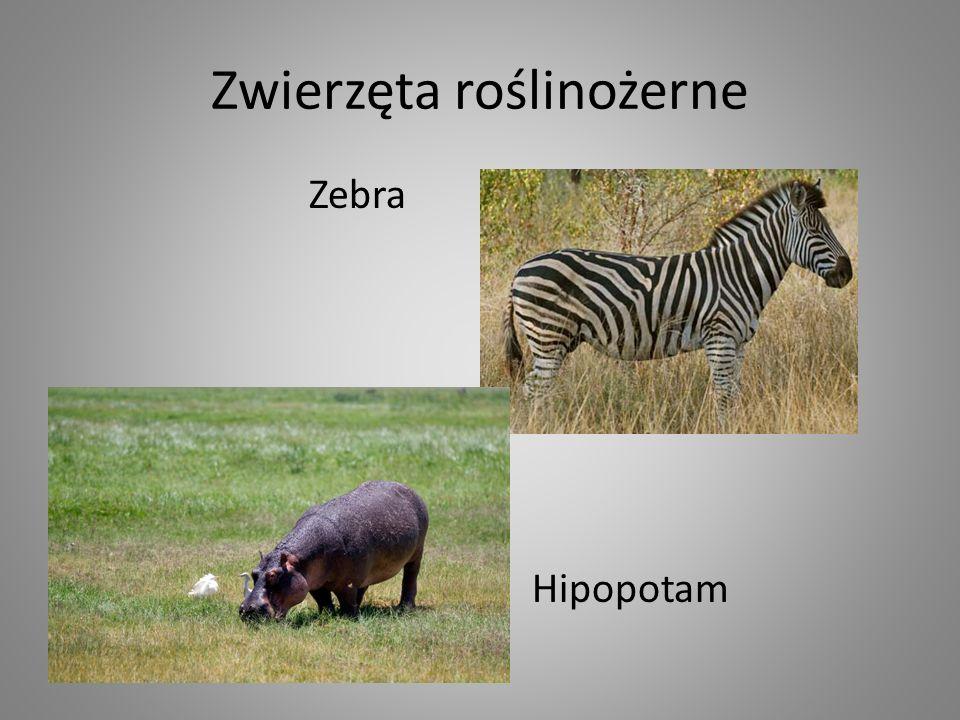 Zwierzęta roślinożerne
