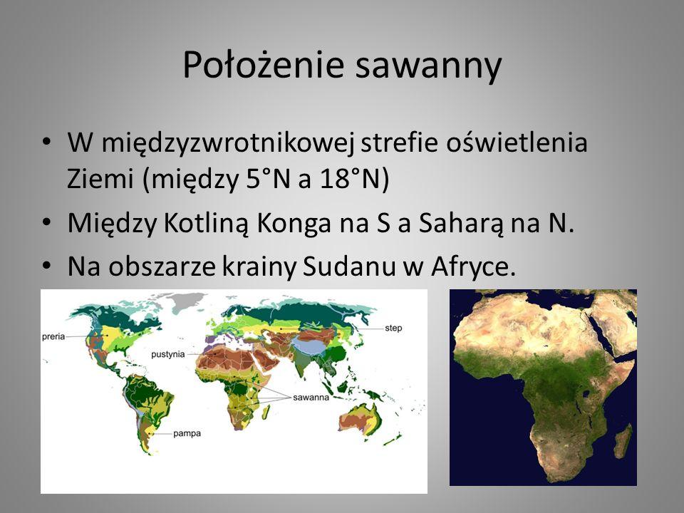 Położenie sawanny W międzyzwrotnikowej strefie oświetlenia Ziemi (między 5°N a 18°N) Między Kotliną Konga na S a Saharą na N.