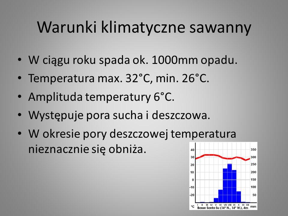 Warunki klimatyczne sawanny
