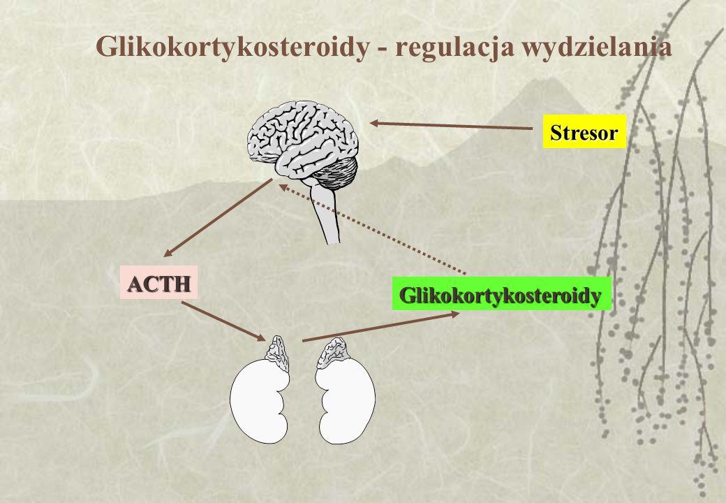 Glikokortykosteroidy - regulacja wydzielania