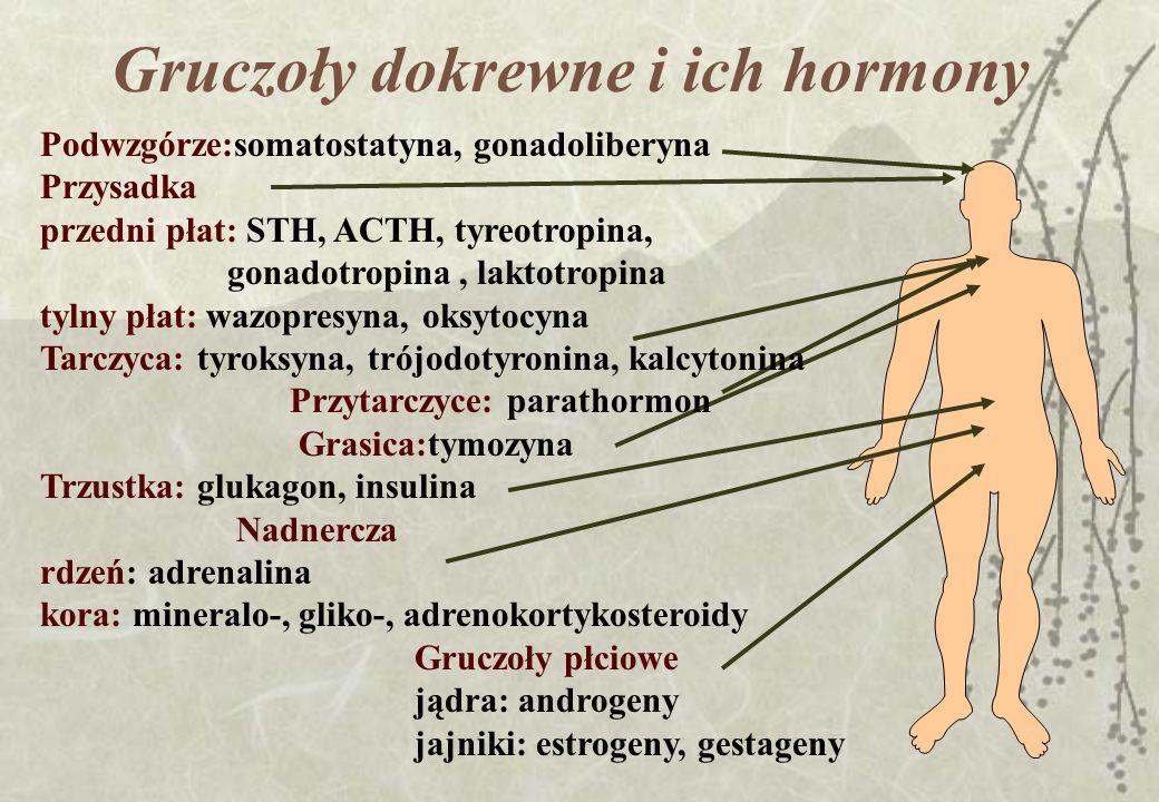 Gruczoły dokrewne i ich hormony