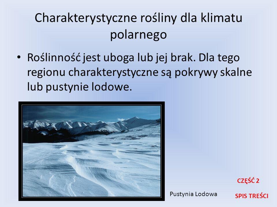 Charakterystyczne rośliny dla klimatu polarnego