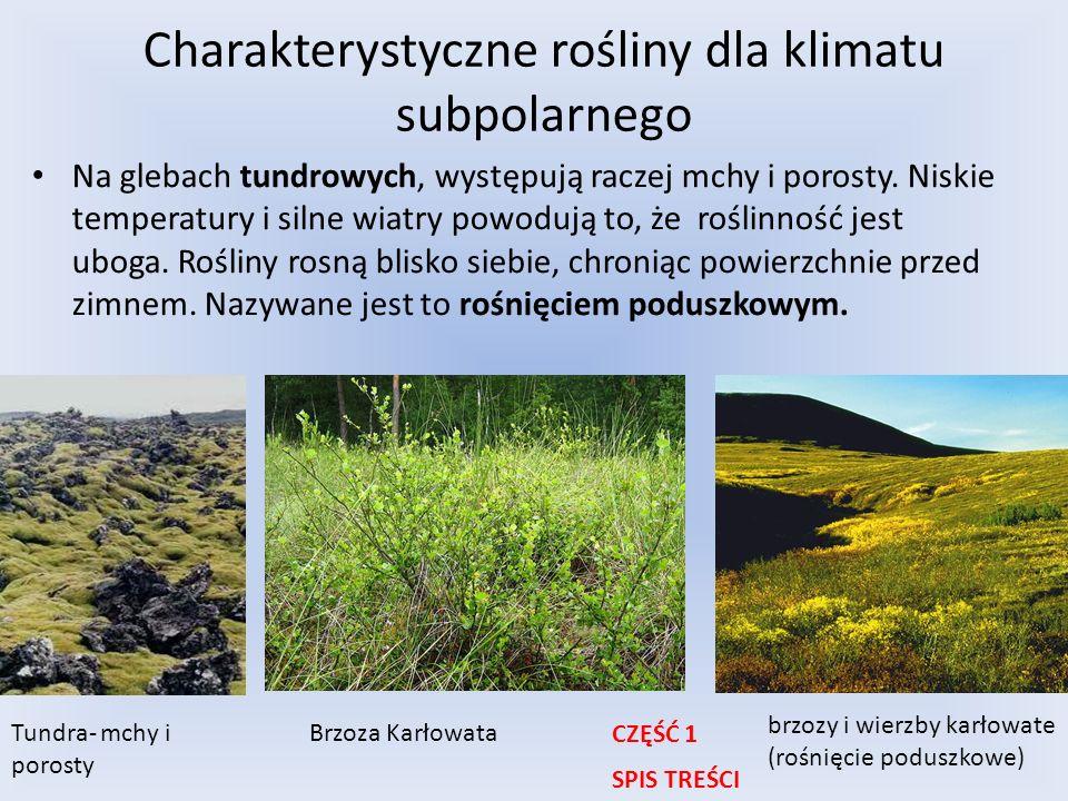 Charakterystyczne rośliny dla klimatu subpolarnego