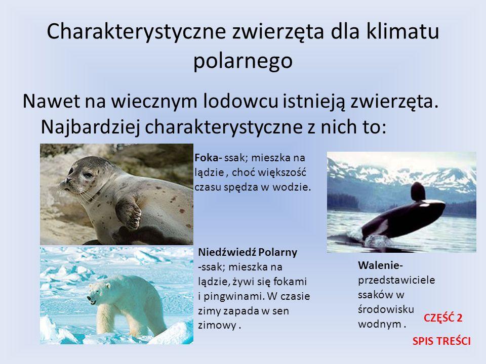 Charakterystyczne zwierzęta dla klimatu polarnego