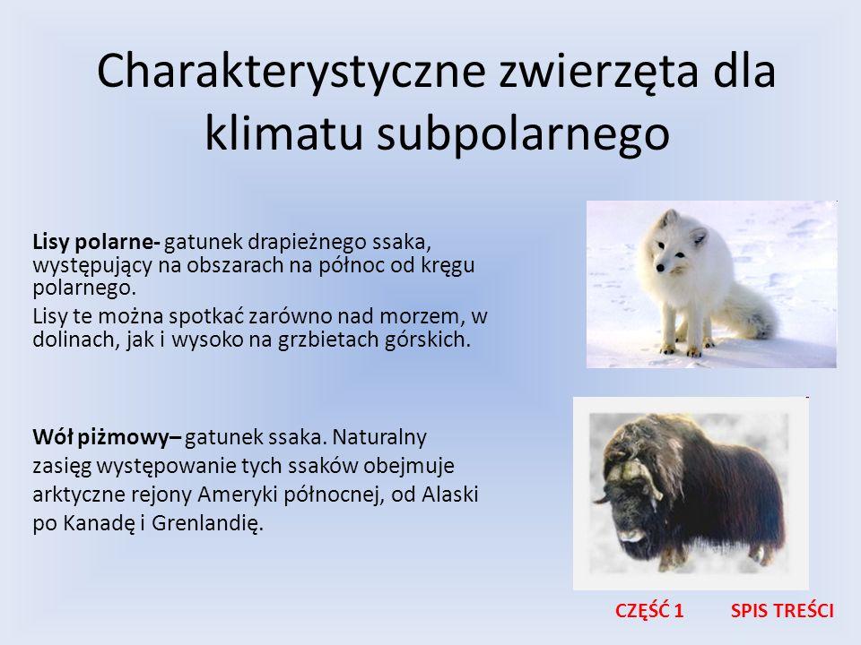 Charakterystyczne zwierzęta dla klimatu subpolarnego