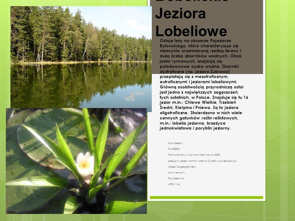 Bobolickie Jeziora Lobeliowe