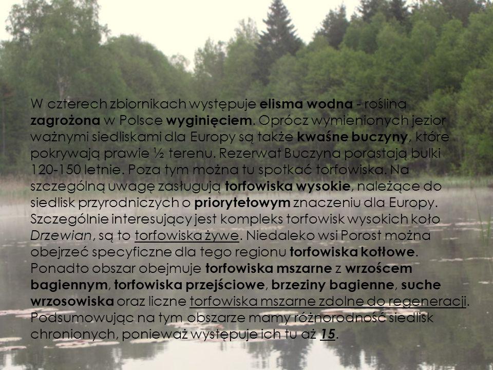 W czterech zbiornikach występuje elisma wodna - roślina zagrożona w Polsce wyginięciem.
