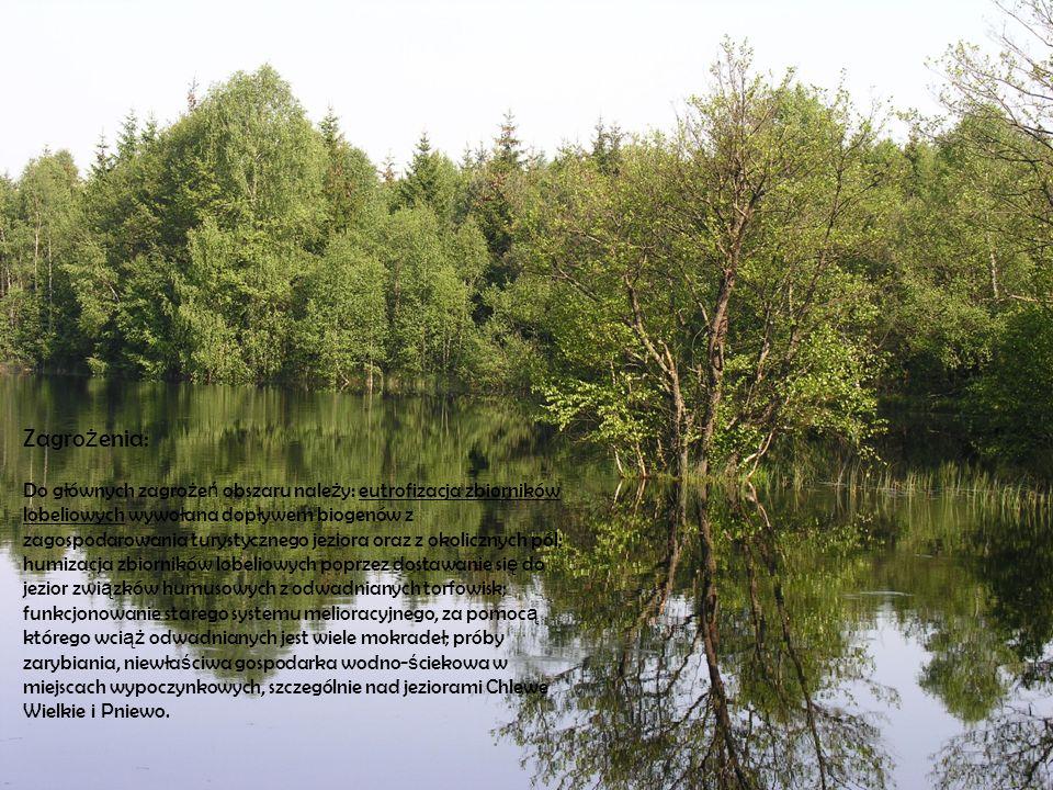 Zagrożenia: Do głównych zagrożeń obszaru należy: eutrofizacja zbiorników lobeliowych wywołana dopływem biogenów z zagospodarowania turystycznego jeziora oraz z okolicznych pól; humizacja zbiorników lobeliowych poprzez dostawanie się do jezior związków humusowych z odwadnianych torfowisk; funkcjonowanie starego systemu melioracyjnego, za pomocą którego wciąż odwadnianych jest wiele mokradeł; próby zarybiania, niewłaściwa gospodarka wodno-ściekowa w miejscach wypoczynkowych, szczególnie nad jeziorami Chlewe Wielkie i Pniewo.