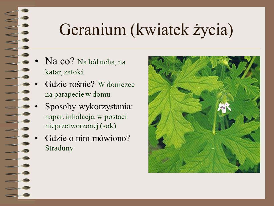 Geranium (kwiatek życia)
