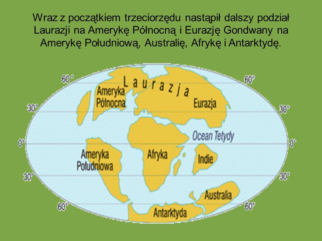 Wraz z początkiem trzeciorzędu nastąpił dalszy podział Laurazji na Amerykę Północną i Eurazję Gondwany na Amerykę Południową, Australię, Afrykę i Antarktydę.