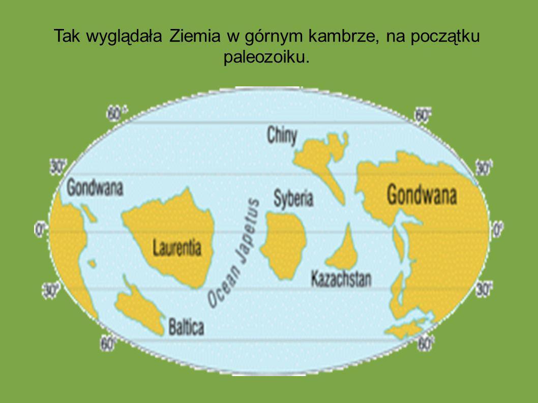 Tak wyglądała Ziemia w górnym kambrze, na początku paleozoiku.