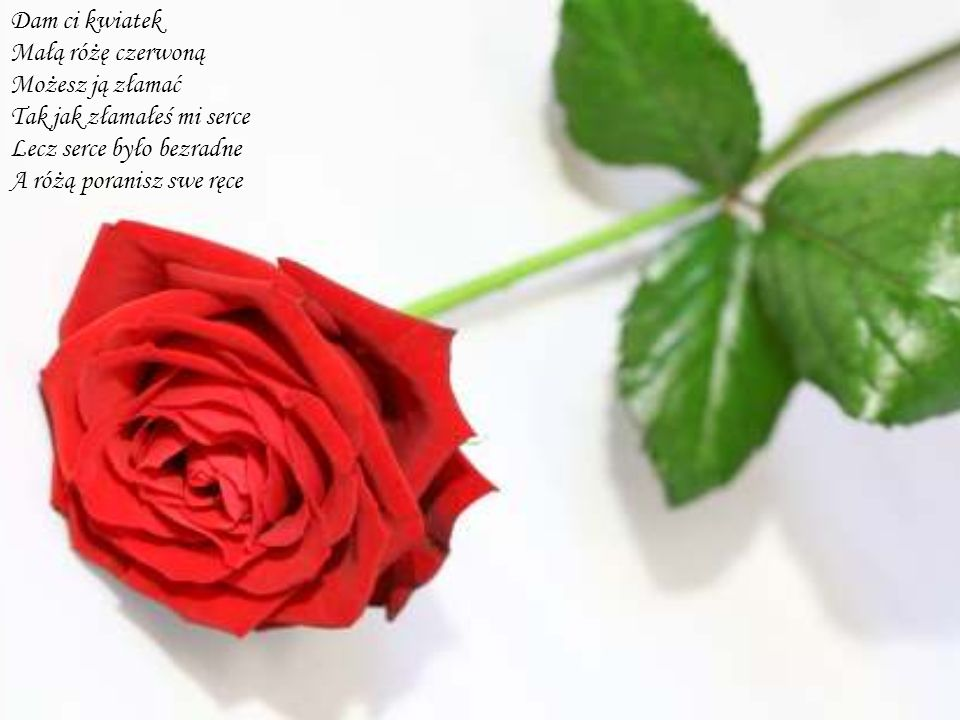 Dam ci kwiatek Małą różę czerwoną. Możesz ją złamać. Tak jak złamałeś mi serce. Lecz serce było bezradne.
