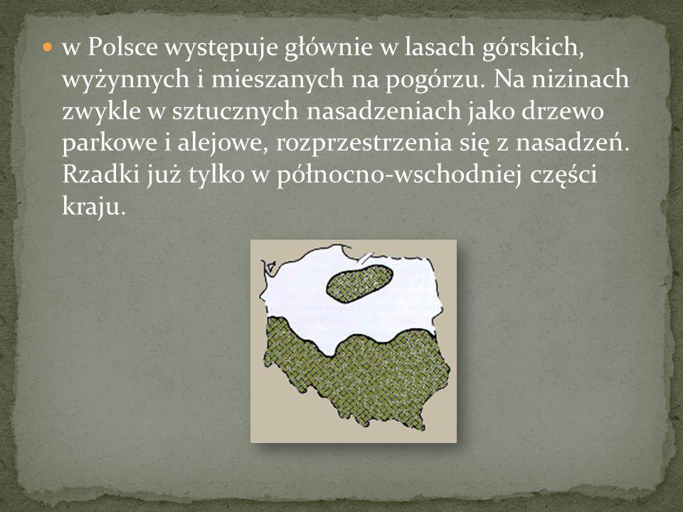 w Polsce występuje głównie w lasach górskich, wyżynnych i mieszanych na pogórzu.
