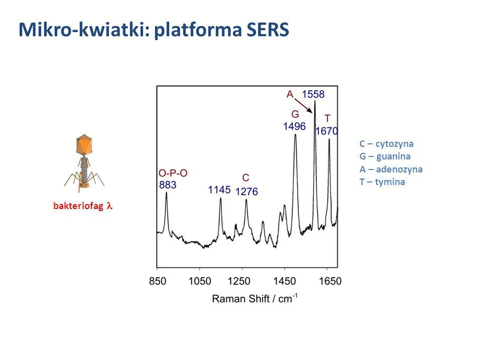 Mikro-kwiatki: platforma SERS