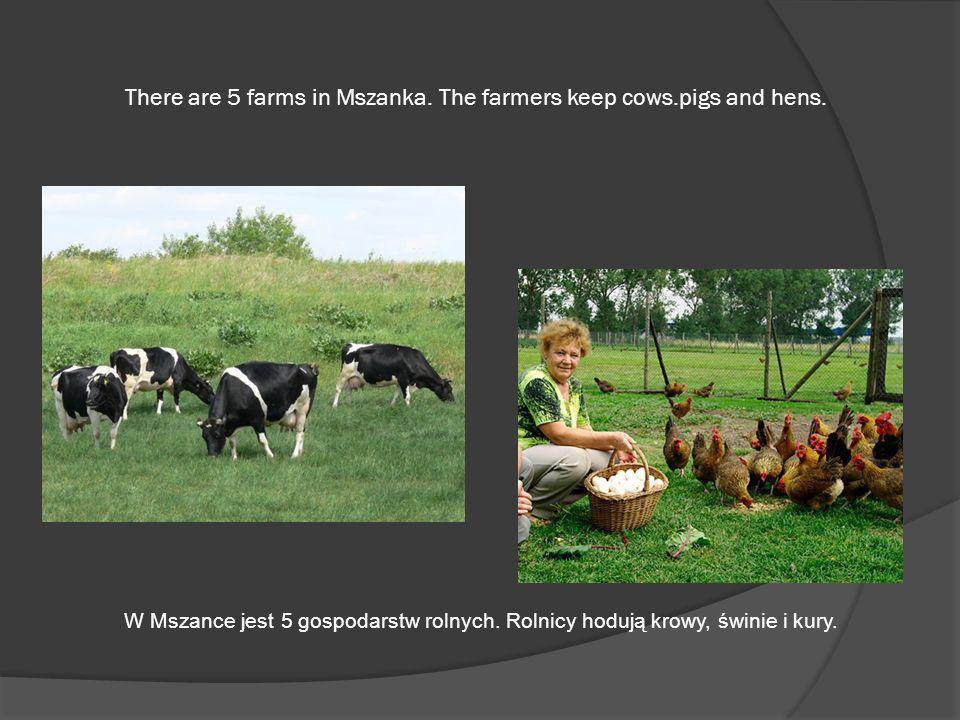 There are 5 farms in Mszanka. The farmers keep cows.pigs and hens.