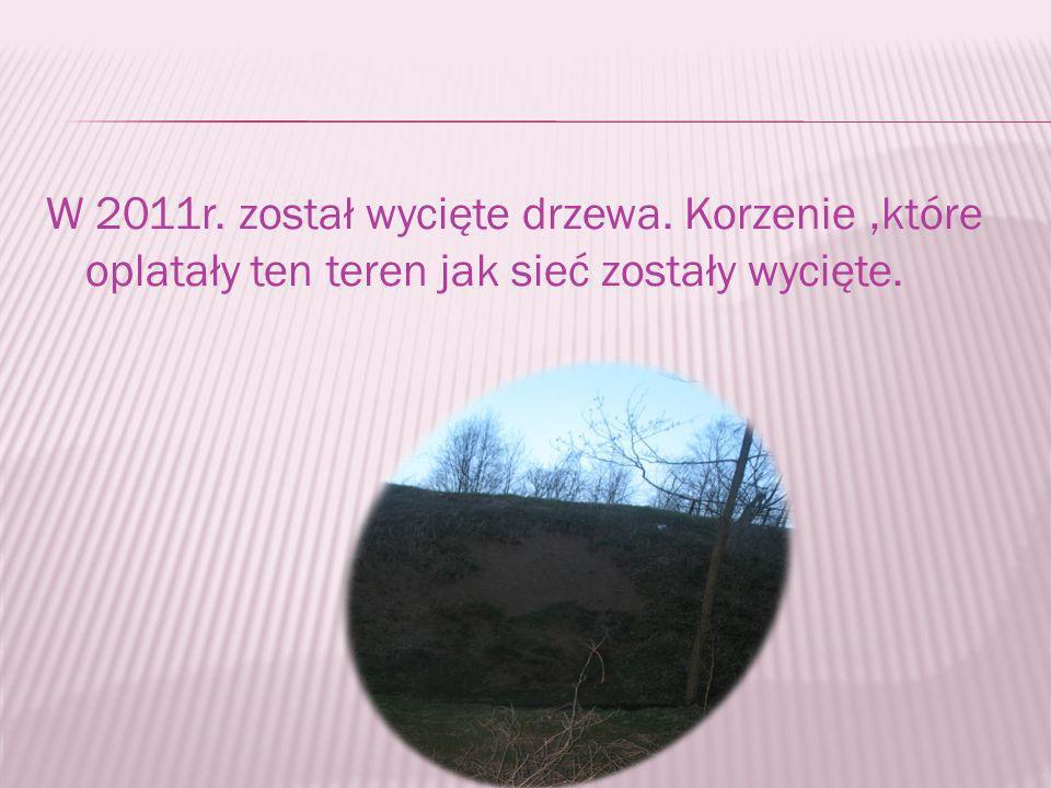 W 2011r. został wycięte drzewa