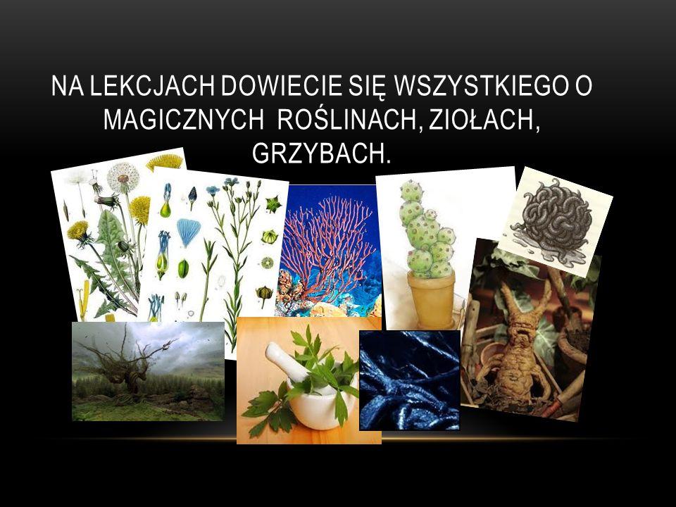 Na Lekcjach dowiecie się wszystkiego o magicznych roślinach, ziołach, grzybach.
