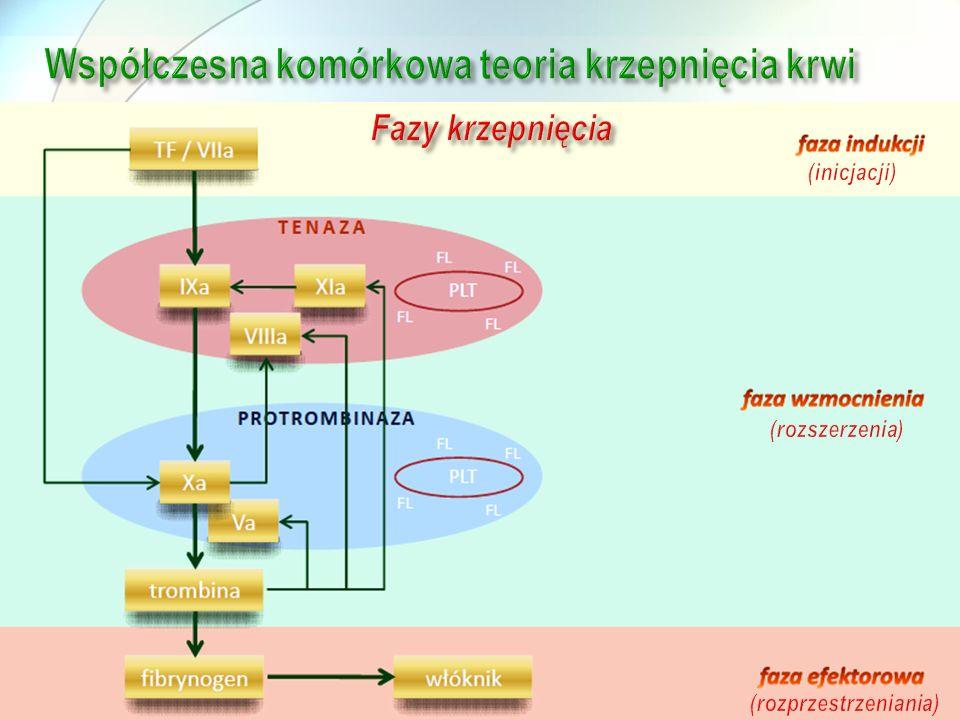 Współczesna komórkowa teoria krzepnięcia krwi