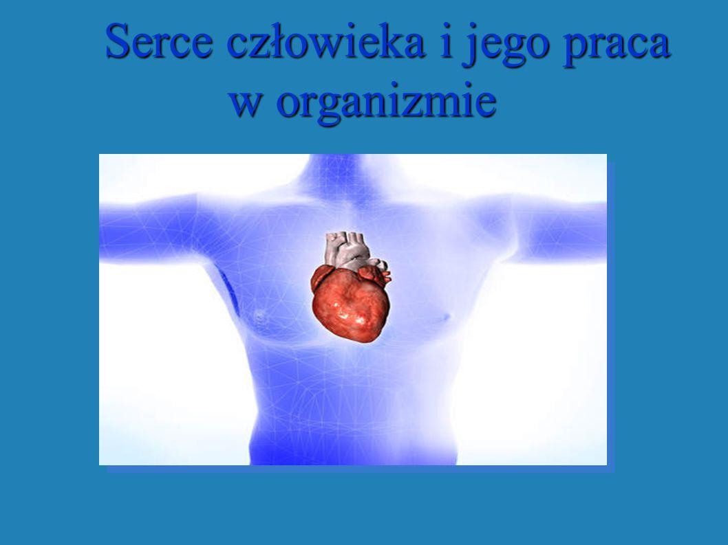 Serce człowieka i jego praca w organizmie