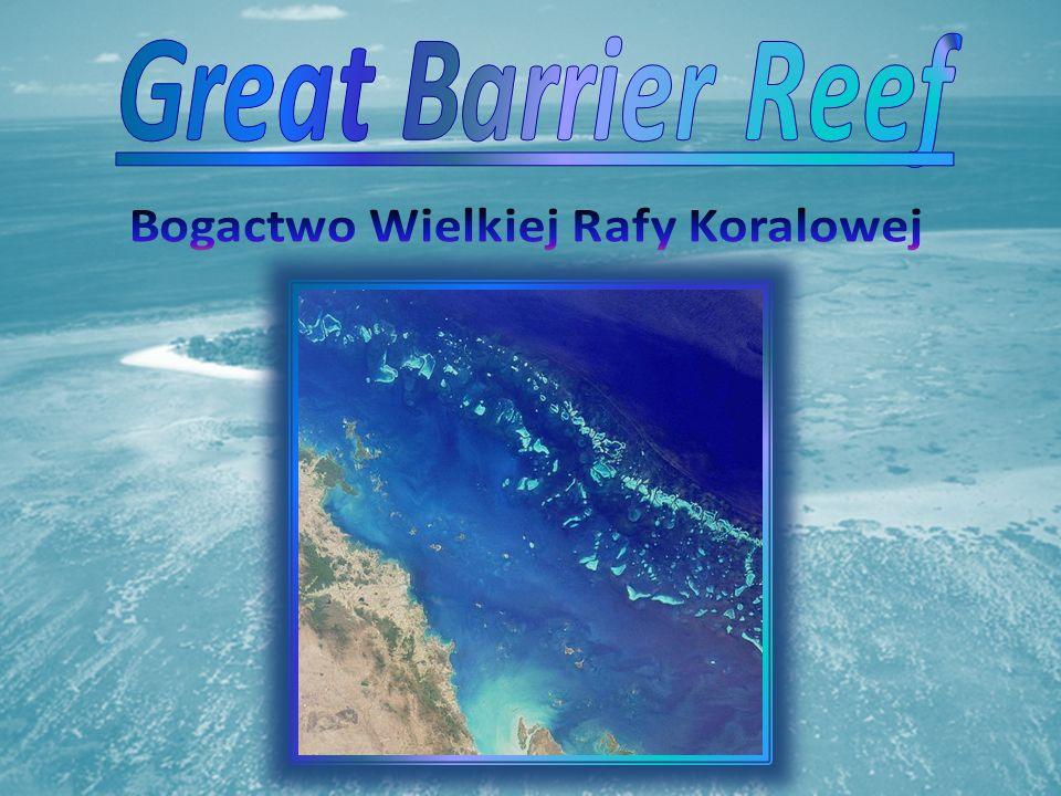 Great Barrier Reef Bogactwo Wielkiej Rafy Koralowej