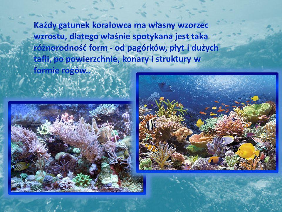 Każdy gatunek koralowca ma własny wzorzec wzrostu, dlatego właśnie spotykana jest taka różnorodność form - od pagórków, płyt i dużych tafli, po powierzchnie, konary i struktury w formie rogów..