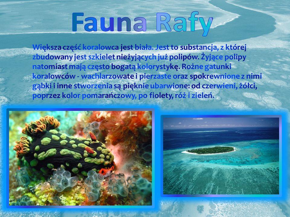 Fauna Rafy