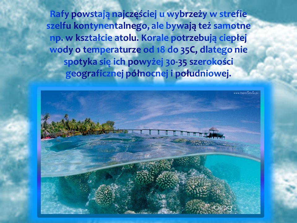 Rafy powstają najczęściej u wybrzeży w strefie szelfu kontynentalnego, ale bywają też samotne np.