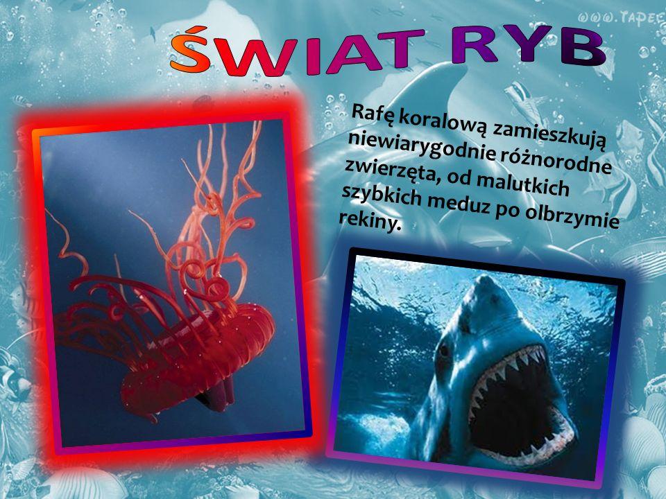 ŚWIAT RYB Rafę koralową zamieszkują niewiarygodnie różnorodne zwierzęta, od malutkich szybkich meduz po olbrzymie rekiny.