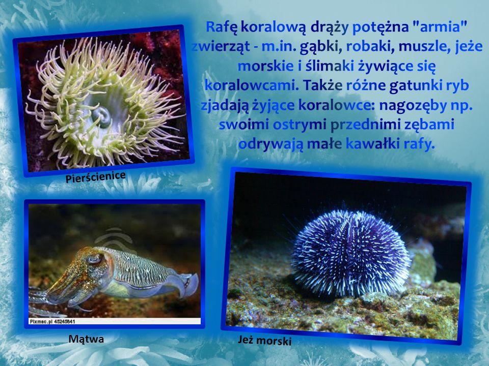 Rafę koralową drąży potężna armia zwierząt - m. in