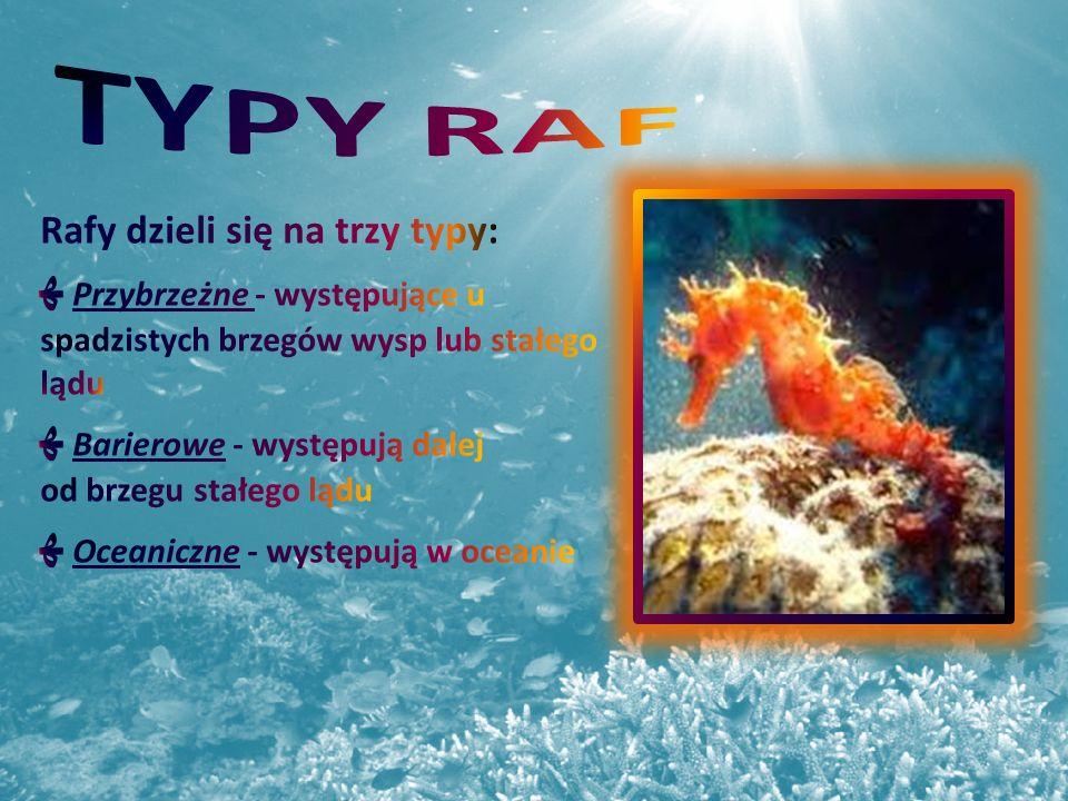 TYPY RAF Rafy dzieli się na trzy typy: ﮭ Przybrzeżne - występujące u spadzistych brzegów wysp lub stałego lądu ﮭ Barierowe - występują dalej.