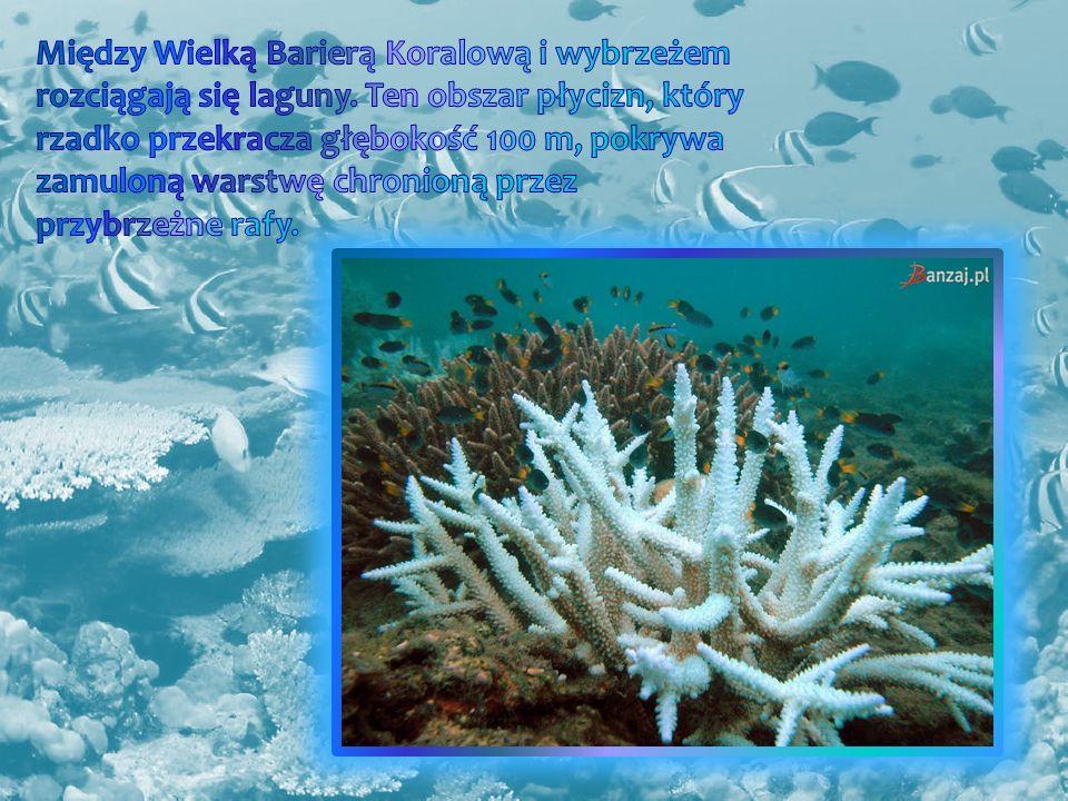 Między Wielką Barierą Koralową i wybrzeżem rozciągają się laguny