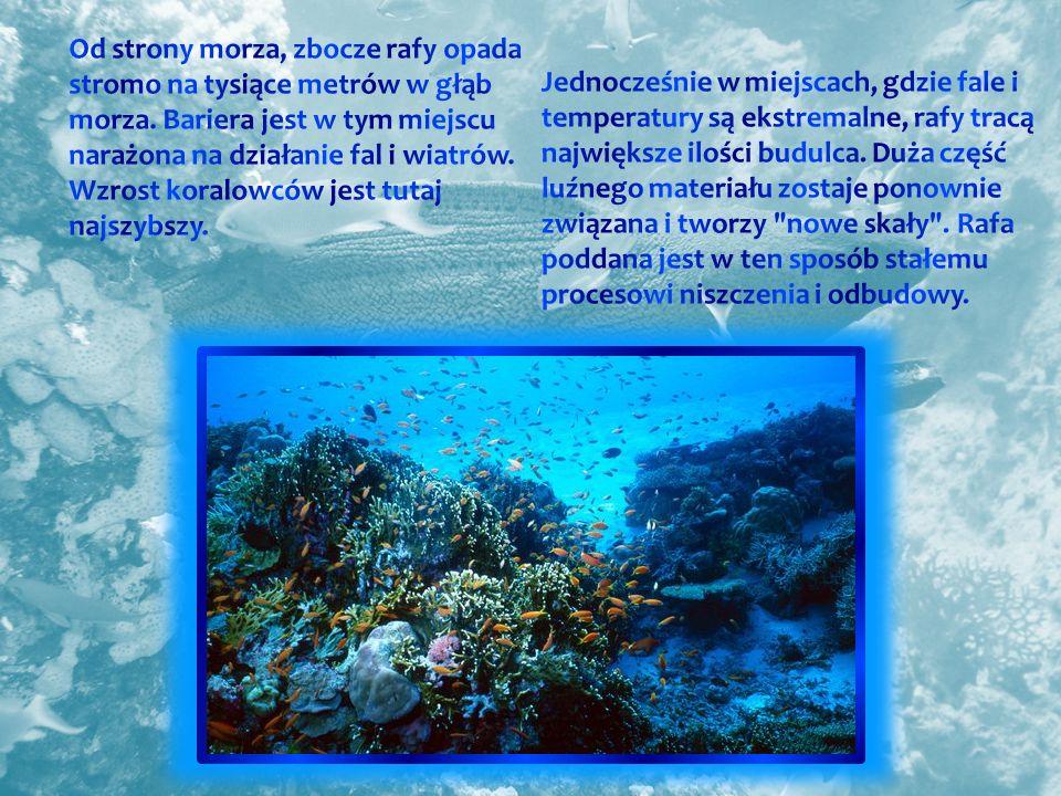 Od strony morza, zbocze rafy opada stromo na tysiące metrów w głąb morza. Bariera jest w tym miejscu narażona na działanie fal i wiatrów. Wzrost koralowców jest tutaj najszybszy.